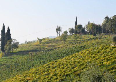 Vigneti in provincia di Bergamo
